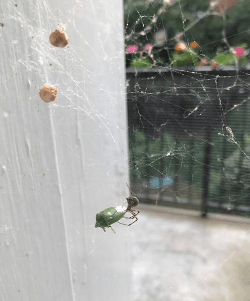 Miss Spider Preparing Dinner